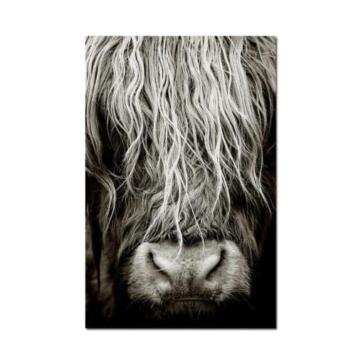 Modern Abstract Scottish Highlander Cattle Print On Canvas Wall Art Pictures Animal painting for Living Room Home Decor