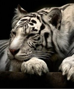 White Tiger Canvas Painting Modern Animals Posters and Prints Cuadros Wall Art Pictures for Living Room Home Decoration Unframed