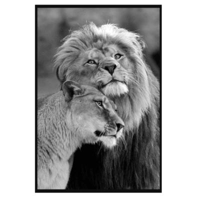 Lion Couple
